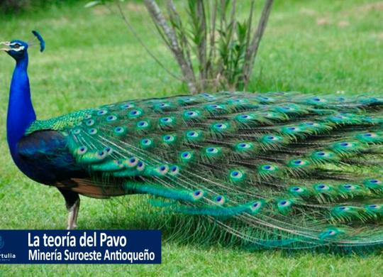 La historia del pavo real